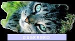 Rango clan: Guerrero