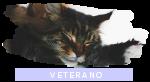 Rango clan: Veterano