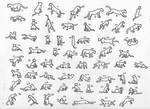 62 Feline Poses