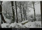 Snowy landscape 20