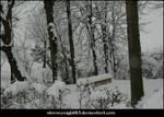 Snowy landscape 21