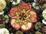 MB3D Flower