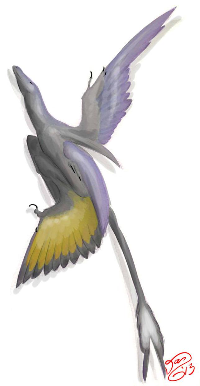 Microraptor by bensen-daniel