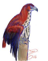 Haast's Eagle by bensen-daniel