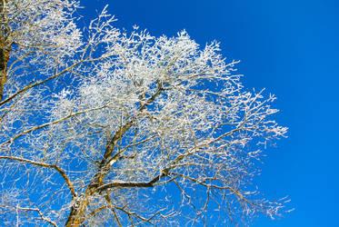 Winter blue by Tasa94