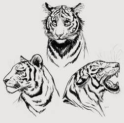 Sketches of tigers