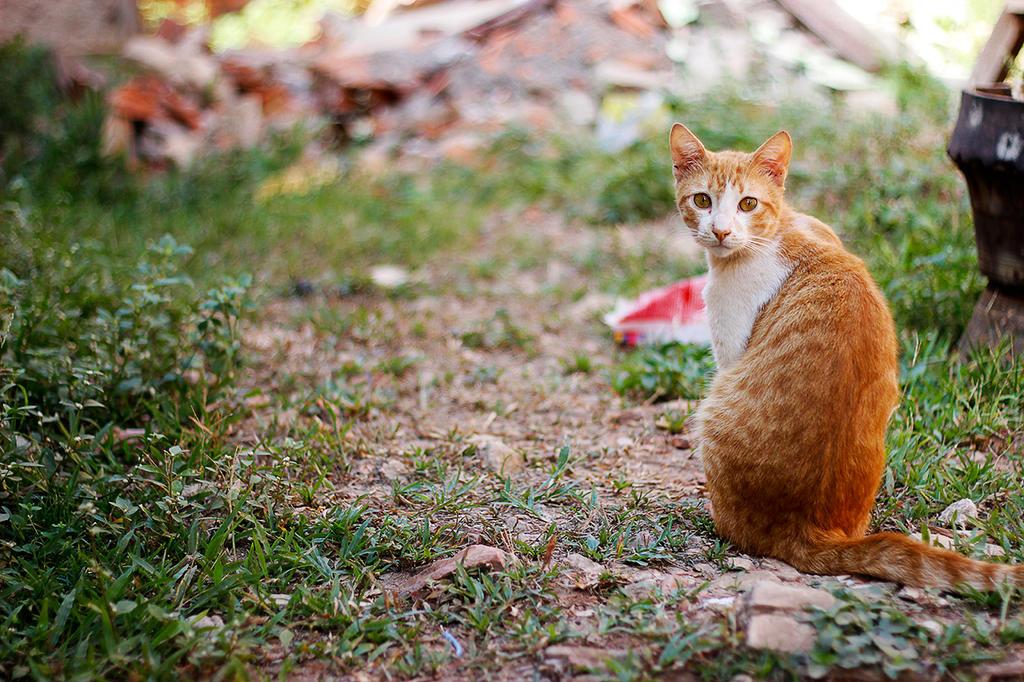 My orange cat by startix