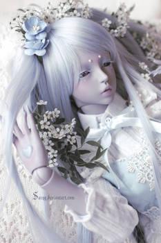 Bed of Flowers III