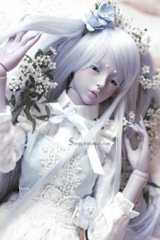 Bed of Flowers V