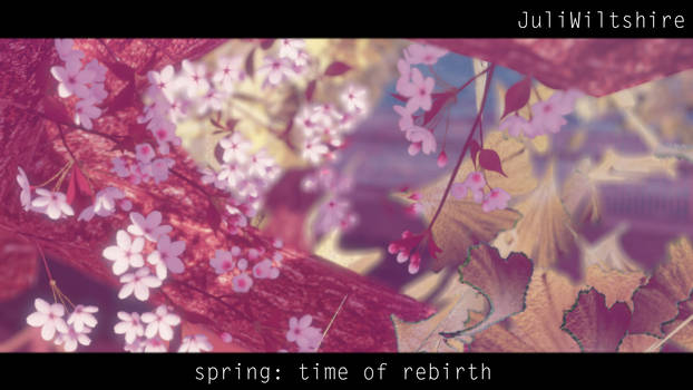 flowers [theme: Spring: time of rebirth] by JuliWiltshire