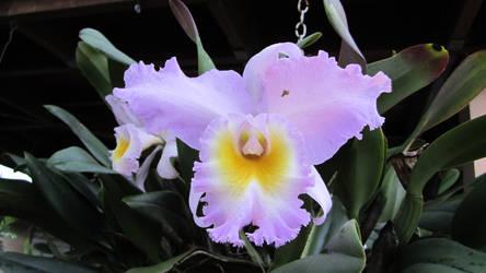 gotta love these flowers.. by escalprillo