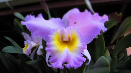 gotta love these flowers 2 by escalprillo