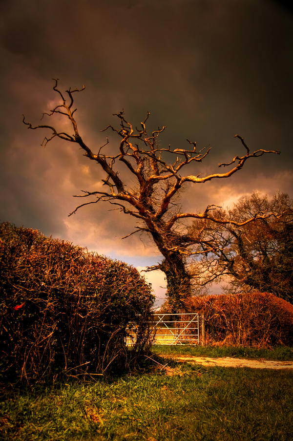 A dead tree by Ra1Der