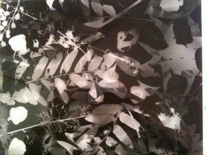 Darkroom pictogram 5