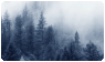Misty forest page decoration . free to use by SmiifKoqla