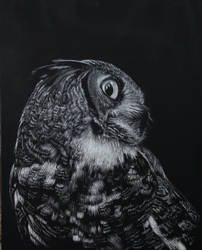Great Horned Owl by chalkolotcake