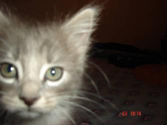 Erase una vez un gatito by Koryu084