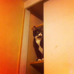 Satomi en el closet by Koryu084