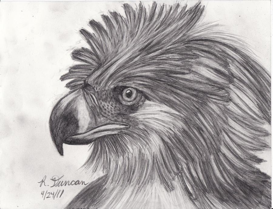philippine eagle by shieldwolf123 on DeviantArt
