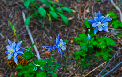 The Columbines by hellhoundp2k
