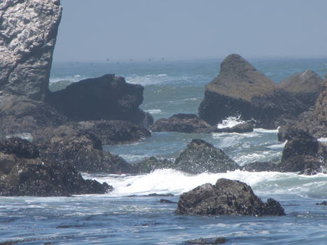 Ocean Environment 17