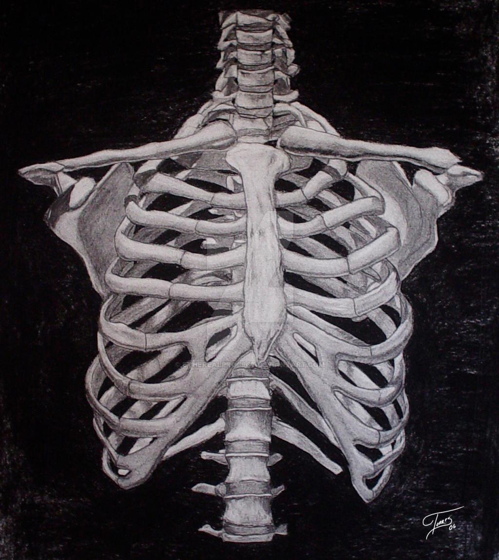 Фото грудины человека 20 фотография