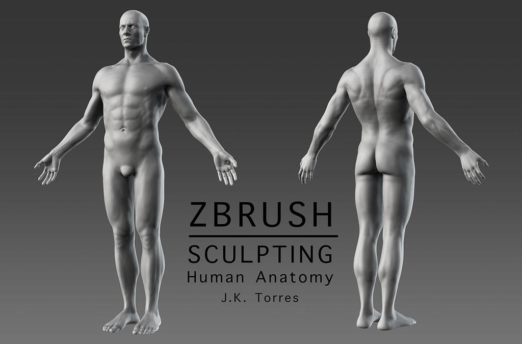 ZBrush Character Sculpting and Human Anatomy by EtherealProject on ...