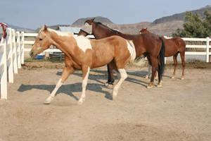 Horse 75
