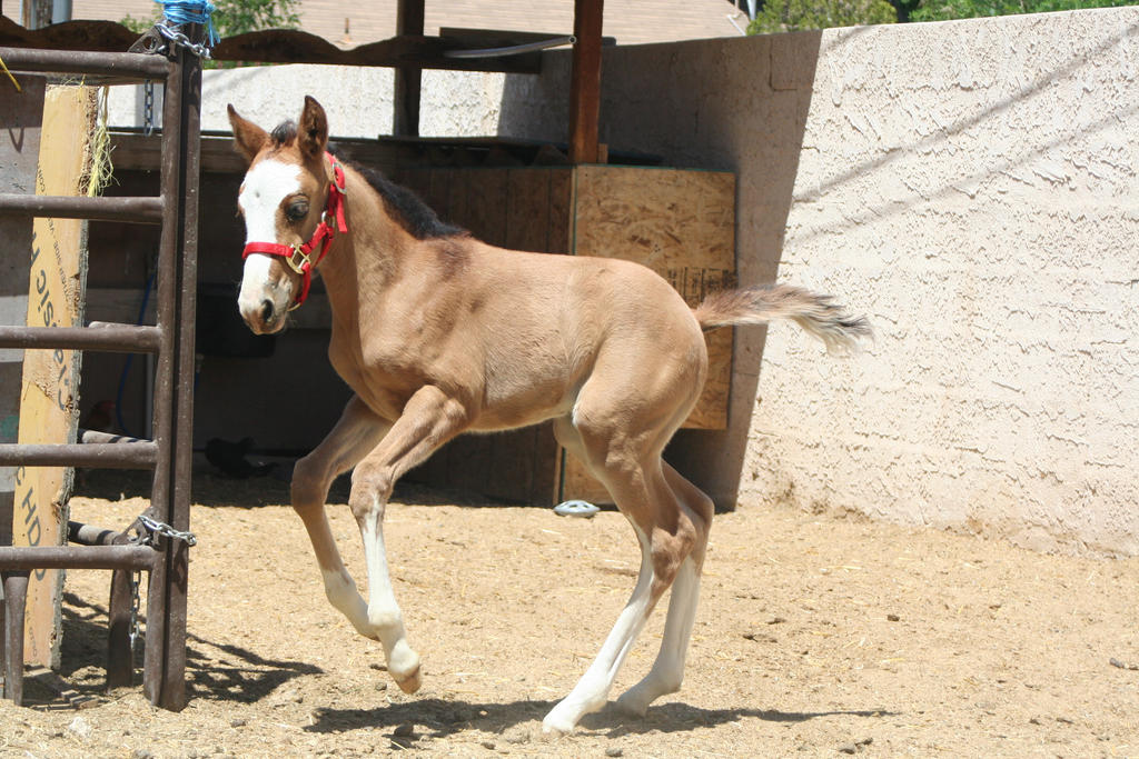 Foal 3 by Mustang4-Stock