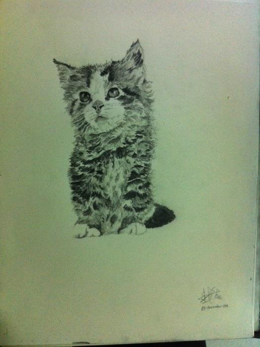 Kitten by thiphobia