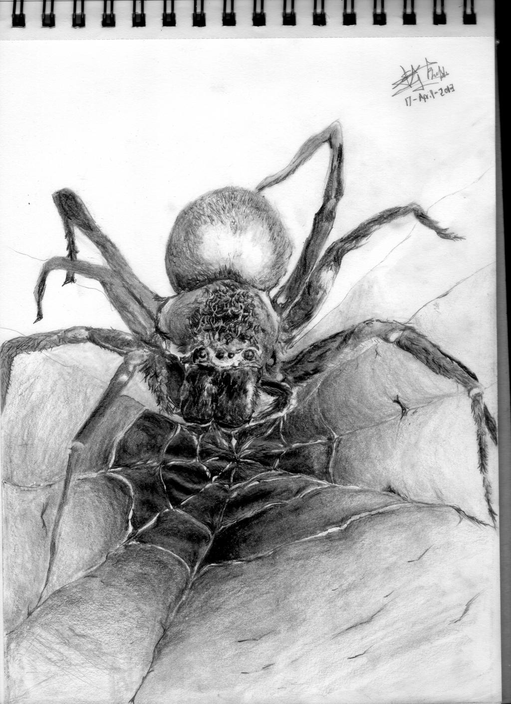 Spider by thiphobia