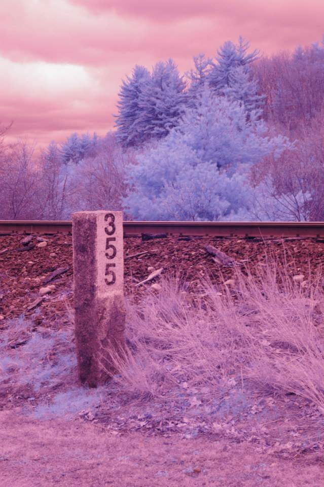 355 infrared Photography by BeanSprout-Photog