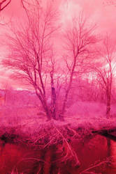 Mighty Tree Infrared Photography by BeanSprout-Photog