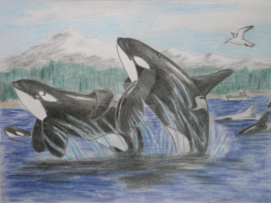 Gift to Britannia-Orca by Kaimona