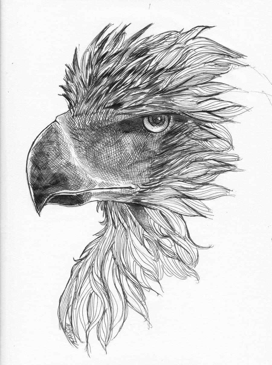 philippine eagle by PraetorKai on deviantART