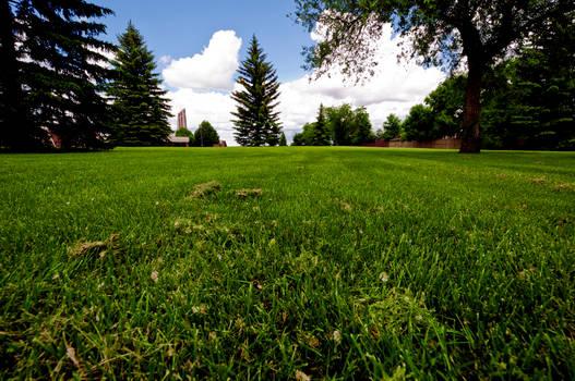 Grassy Field Stock