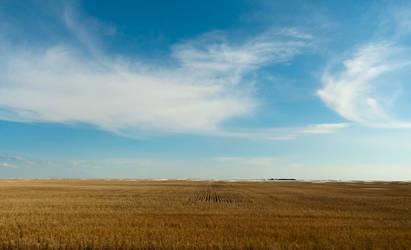 Prairie Field Stock