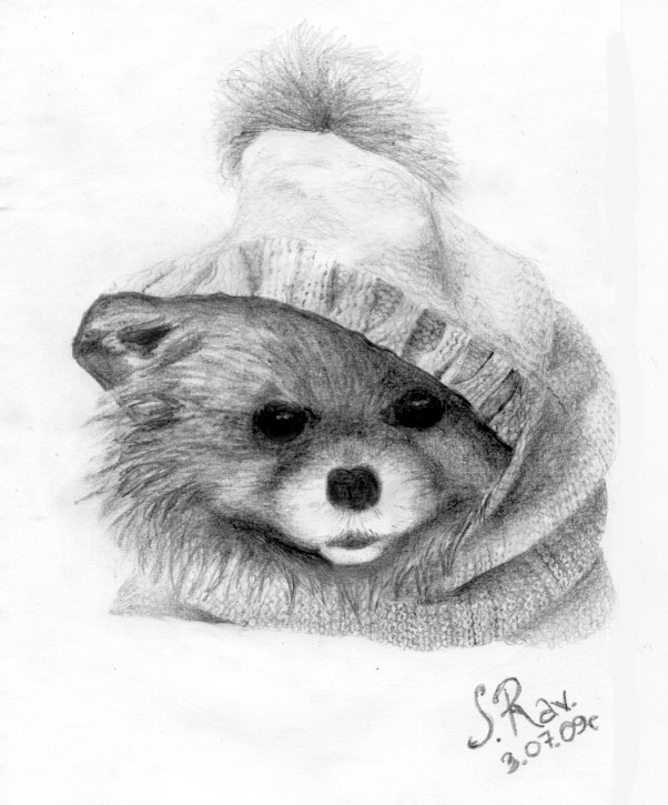 Pomeranian By Zw1138 On Deviantart