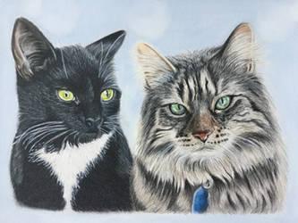 Pretty Kitties by Theladywolfheart