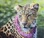 Leid Leopard by Theladywolfheart