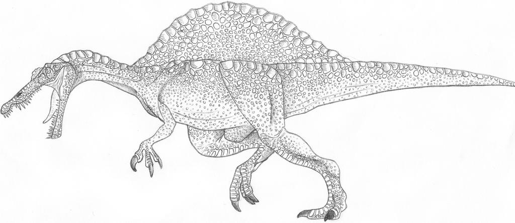 Image Result For T Rex Coloring Page Spinosaurus Step By