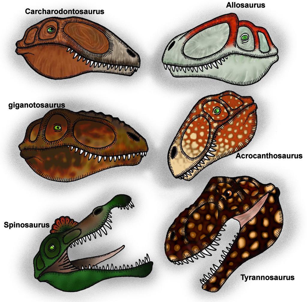 Theropod Heads