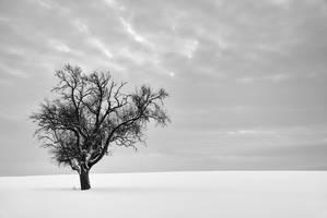Solitude by 2-0-1-9