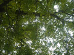 A Canopy