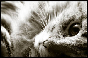 Cat by simonleppanen