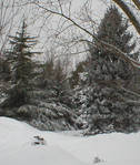 Snow by johnhmaloney