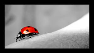 coccinelle by keneda999