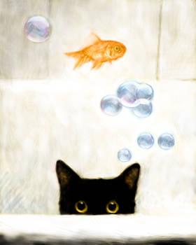 Cat Fish Bubbles