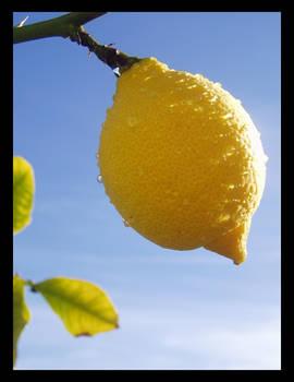 California Lemon