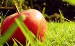 Fresh apple wallpaper